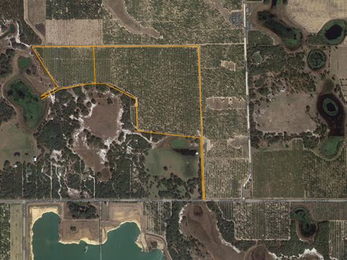 65 Acre Grove In Lake Wales : Lake Wales : Polk County : Florida