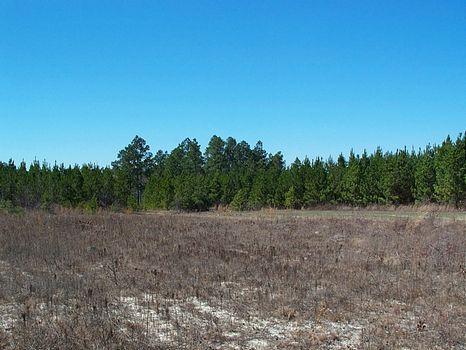 350 Acs Creeks & Frontage : Adrian : Johnson County : Georgia