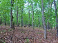 Hardwood, Cabin & Creek : Tignall : Wilkes County : Georgia