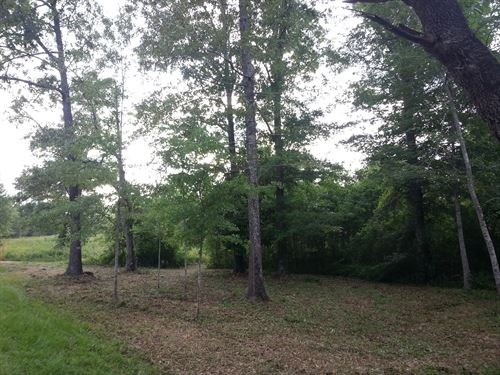 Beautiful Forest With Walking Trail : Purvis : Lamar County : Mississippi