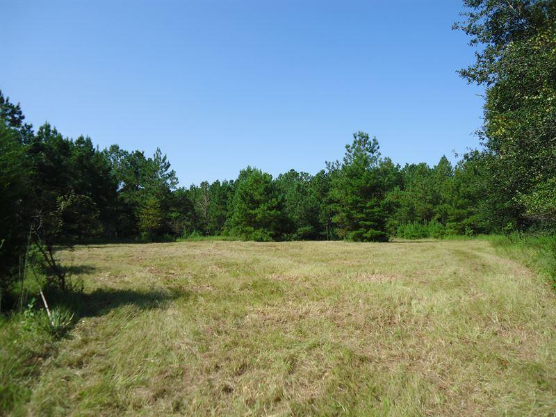 Perfect Small Hunting Property : Hawkinsville : Pulaski County : Georgia