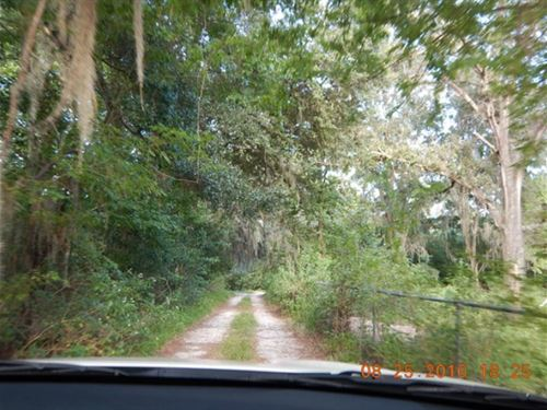 1.6 Acres In Gainesville, FL : Gainesville : Alachua County : Florida