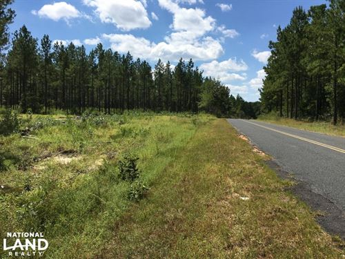 Residential Tract With Mature Timbe : Williston : Aiken County : South Carolina