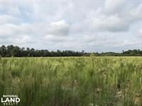 Roseboro Hunting Farm Land : Roseboro : Sampson County : North Carolina