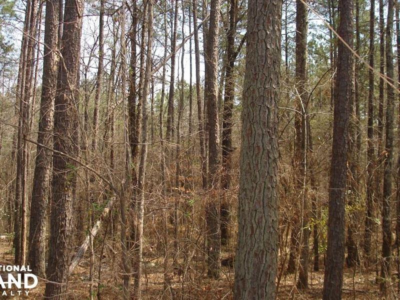 Hosmer Road Home Site : Vance : Tuscaloosa County : Alabama