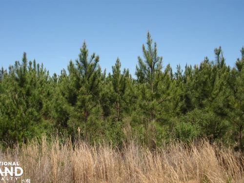 Hannah Creek Road Hunting And Timbe : Brookwood : Tuscaloosa County : Alabama