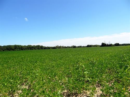 40 Ml Ac Farmland Near Cache River : Cotton Plant : Woodruff County : Arkansas