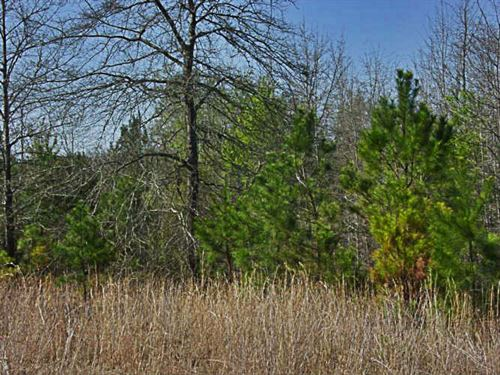 Wooded, Private Acreage With Trees : Chesterfield : South Carolina