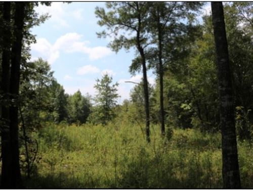34 Acres In Newton County : Lawrence : Newton County : Mississippi