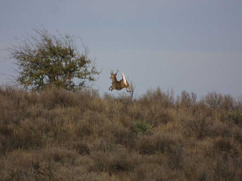 Red River Hunting : Davidson : Tillman County : Oklahoma