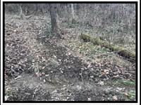 Wild Turkey Valley : Dresden : Muskingum County : Ohio