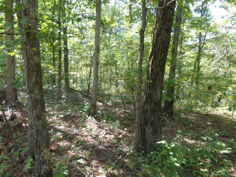 Tennesseee Land, Owner Financing : Waynesboro : Wayne County : Tennessee