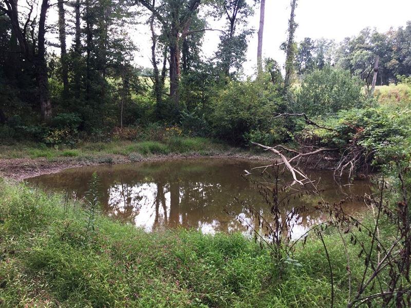 Heisz Rd Hunting Land : Steuben : Crawford County : Wisconsin
