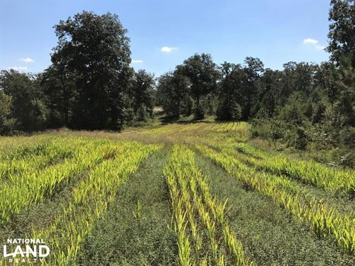 Ready's Pond Tract : Aiken : South Carolina