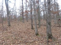Wooded Tennesse Land, Financing : Bethel Springs : McNairy County : Tennessee