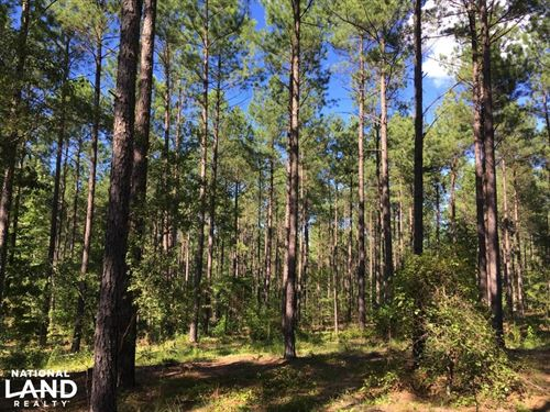 Timber Investment : Tignall : Wilkes County : Georgia