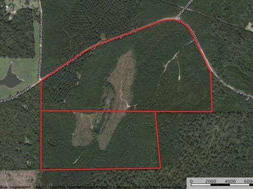 220 Acres Waynesboro, Wayne County : Waynesboro : Wayne County : Mississippi