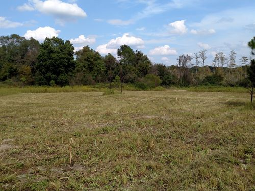 5 Ac Pasture Land - $1000 Down : Cordele : Crisp County : Georgia