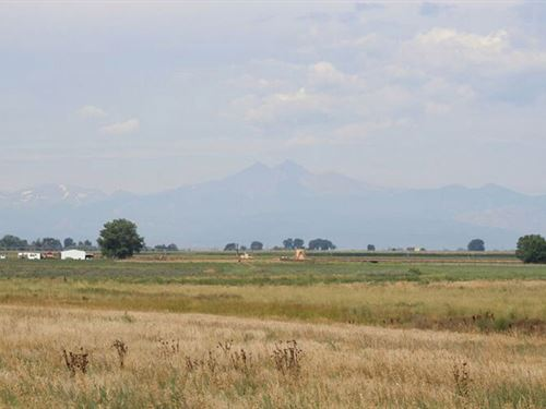 McLaughlin Grass : Mead : Weld County : Colorado