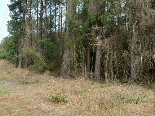 17.96+/- Acres In Southern Pines : Southern Pines : Moore County : North Carolina