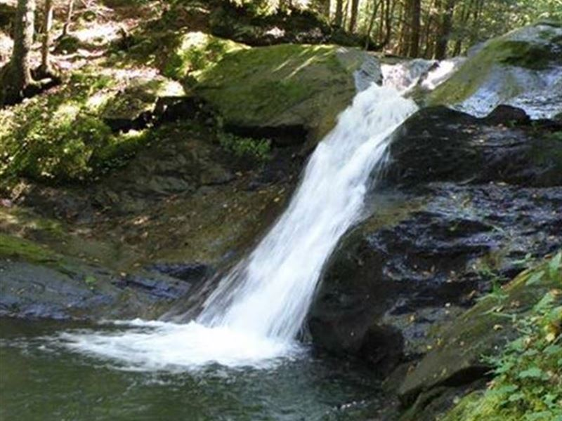 Pacific Brook Forest : Montgomery : Franklin County : Vermont