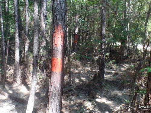 32 Ac - Timberland & Hunting Tr : Jasper : Texas