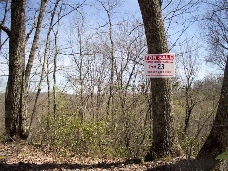 Chestnut Oak Ridge Tract 23 : Mt Vernon : Rockcastle County : Kentucky