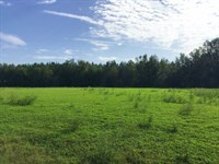 5 Acres With Paved Road Frontage : McAlpin : Suwannee County : Florida