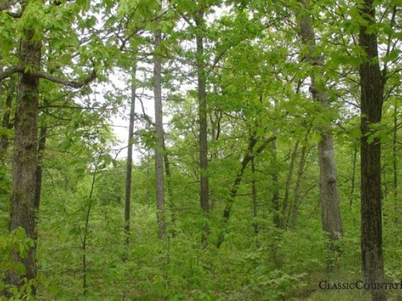 Rogue Creek Tract 5 : Potosi : Washington County : Missouri
