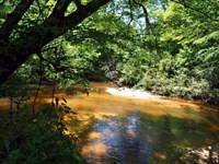 135 Acres Hunting Timber Recreation : Magnolia : Pike County : Mississippi