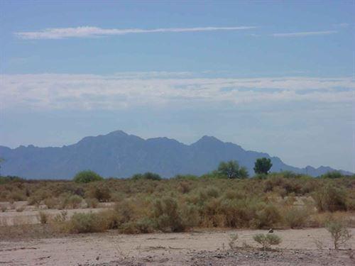 Cactus Adventures : Eloy : Pinal County : Arizona