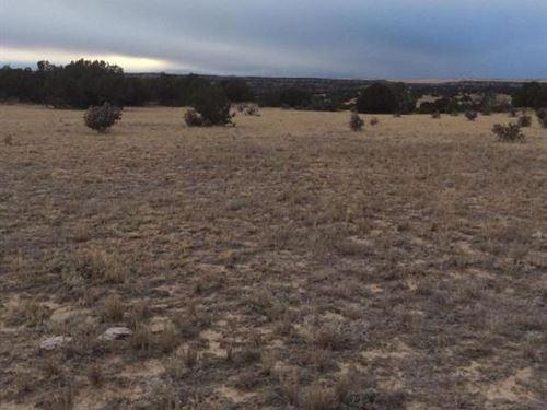 40.5 Acres For Sale In Model, Co : Model : Las Animas County : Colorado