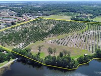 40.14 Acres On Overlook Dr At Lake : Winter Haven : Polk County : Florida