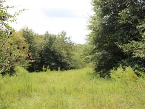 54.6 Acres In Marion County, Missis : Foxworth : Marion County : Mississippi