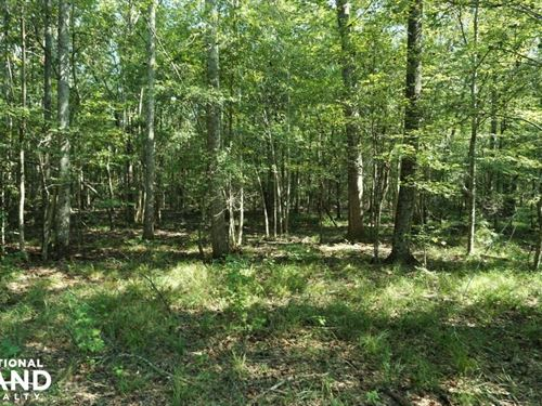 Kings Landing Outstanding Hunting : Sardis : Dallas County : Alabama