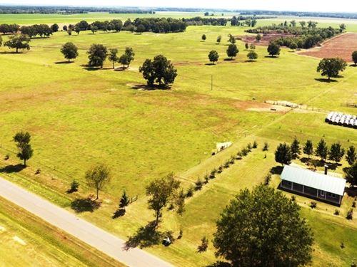 Cattle Farm - Randolph Co Georgia : Shellman : Randolph County : Georgia