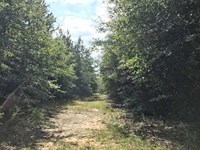 Canoe Creek Tract : Century : Escambia County : Florida