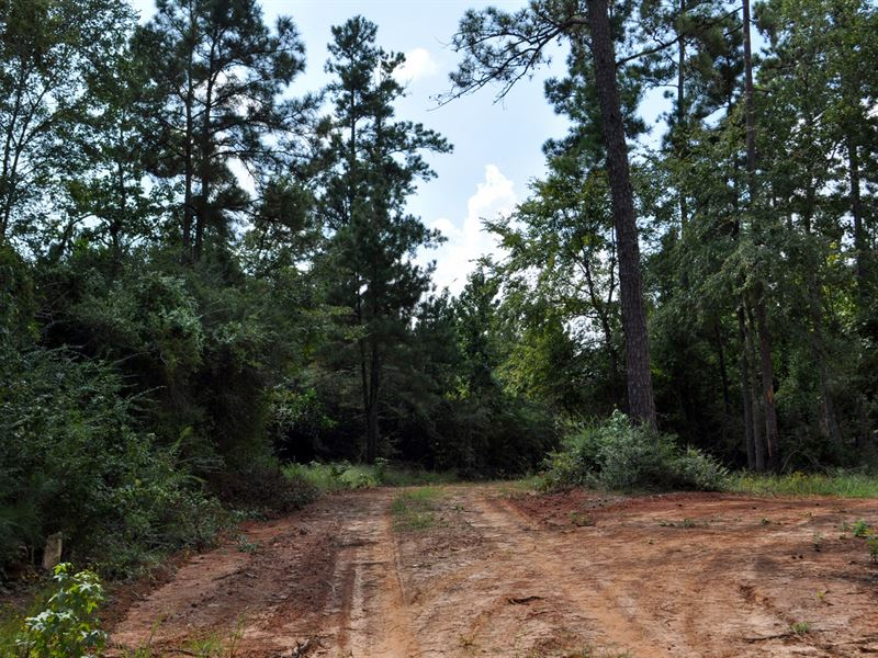 160 Ac Snell Rd : Livingston : Polk County : Texas