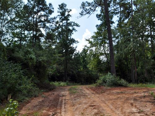 160 Ac Snell Rd : Livingston : Polk County : Texas