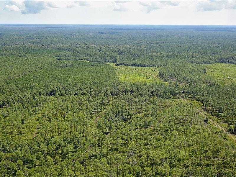 Brick Road Mitigation Bank : Bunnell : Flagler County : Florida