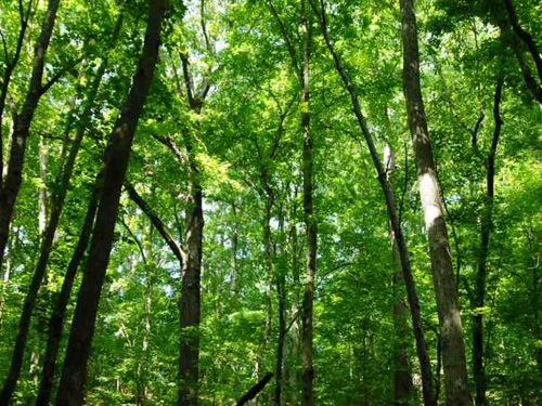 Hunting Land on Crowleys Ridge : West Helena : Phillips County : Arkansas