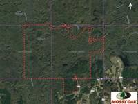 830 Acre Deer, Duck & Hog Hunting : Philadelphia : Neshoba County : Mississippi