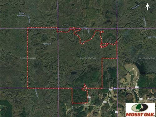 830 Acre Deer, Duck & Hog Hunting : Philadelphia : Neshoba County : Mississippi