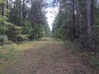 Price Reduced 203 Acre Mat : Porterville : Kemper County : Mississippi