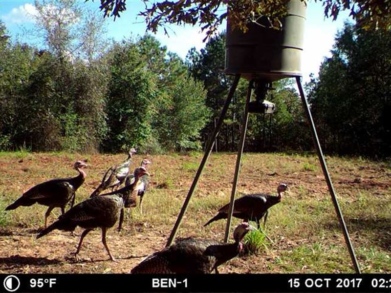146 Acre Attala County MS Deer : Kosciusko : Attala County : Mississippi