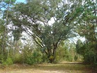 61.5 Acres Hunting & Timber LA : Picayune : Pearl River County : Mississippi