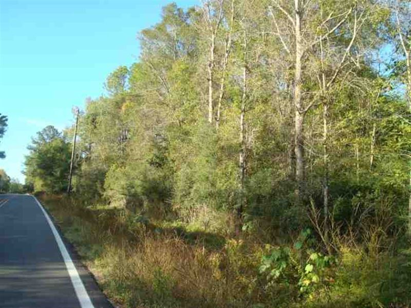 110 Acres Hunting & Timber LA : Picayune : Pearl River County : Mississippi