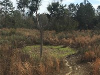 41 Acres Timber And Hunting La : Prentiss : Jefferson Davis County : Mississippi