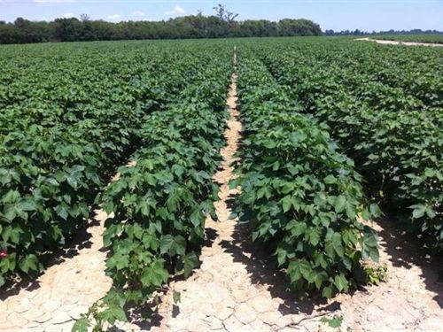 715 Acres, Humphreys Co. Near : Cruger : Humphreys County : Mississippi