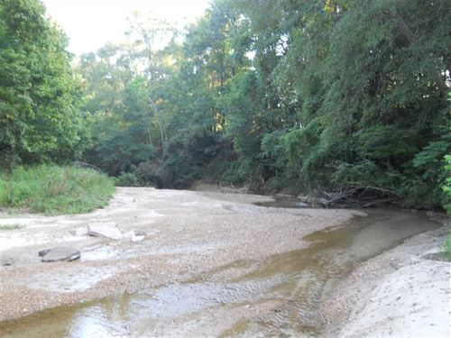 228 Acre Super Hunting Tract Minut : Natchez : Adams County : Mississippi